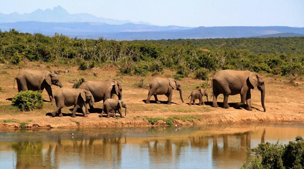 Safari in South Africa