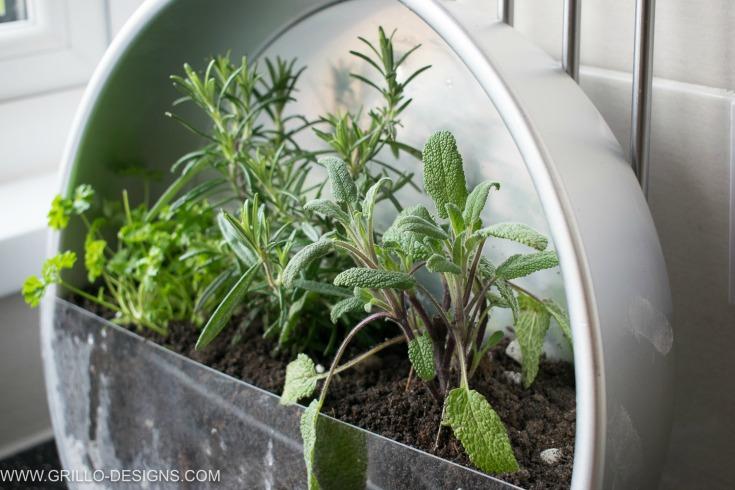 Baking tin herb garden idea
