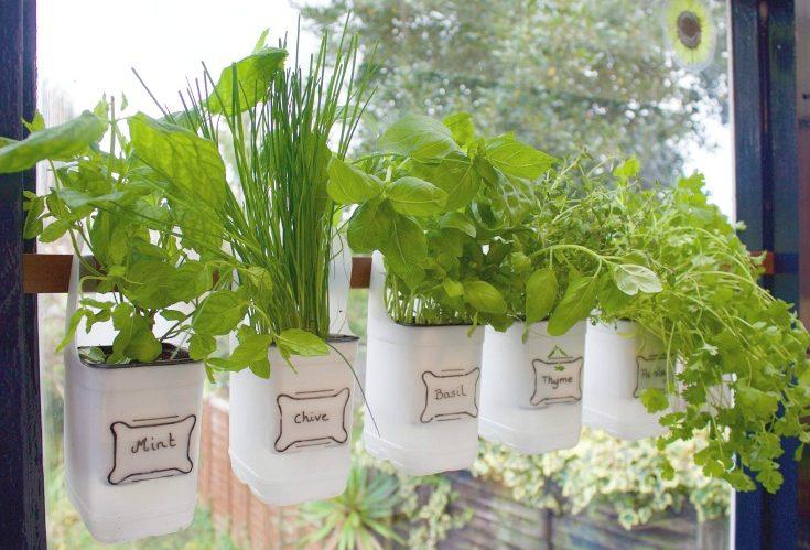 Herbal garden DIY