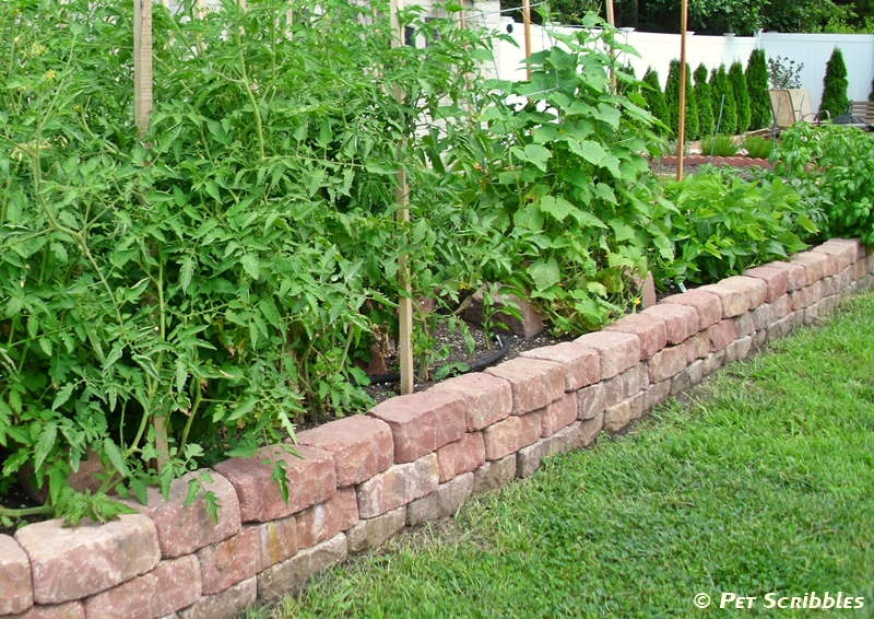 Raised Wall Garden
