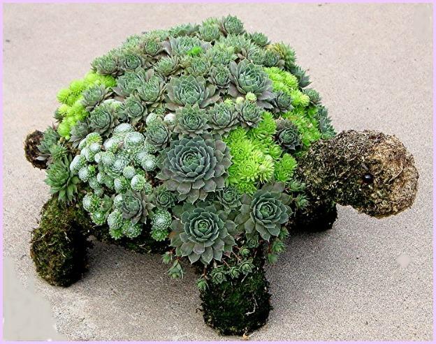 Succulent Turtle Garden DIY