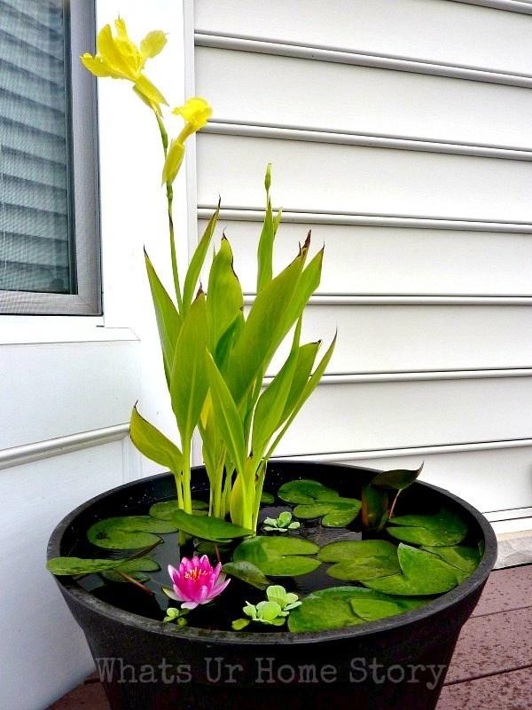 Water Garden DIY
