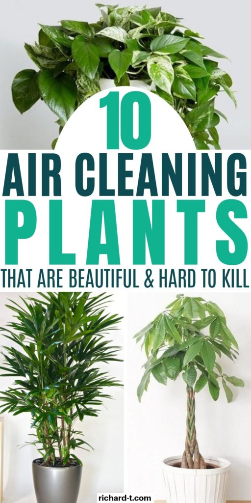 10 Air Cleaning Plants