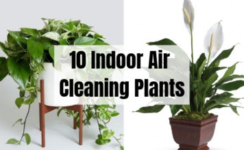 10 Indoor Air Cleaning Plants