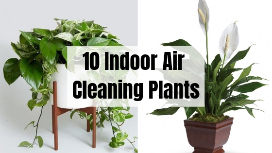10 Indoor Air Cleaning Plants That Look Amazing Filter Your All Day