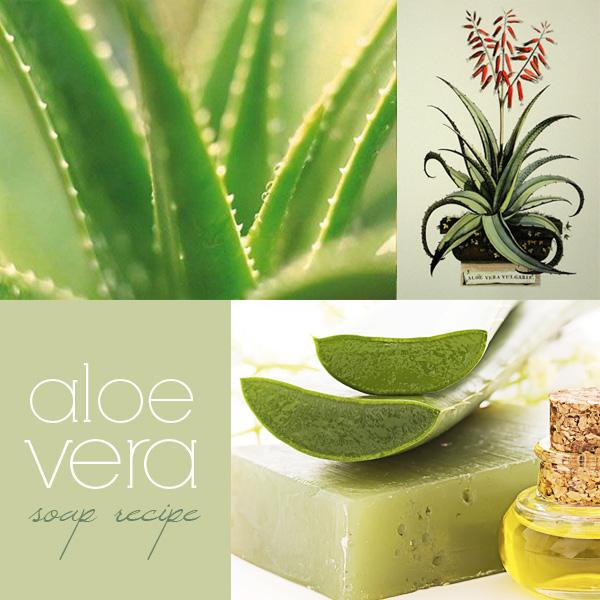 Aloe Vera Homemade Soap